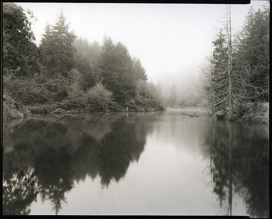 Slough, Along the Lower Alsea, Oregon